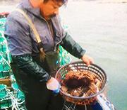 长岛老刁渔家乐