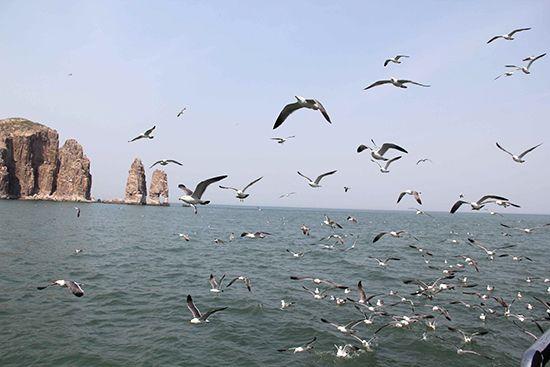 山东长岛海上游游客新去向 海上石林追逐鸥影
