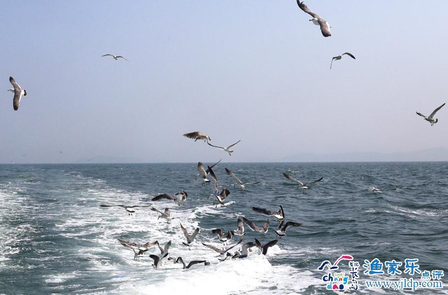 去山东长岛——万鸟岛 看海鸥翔集